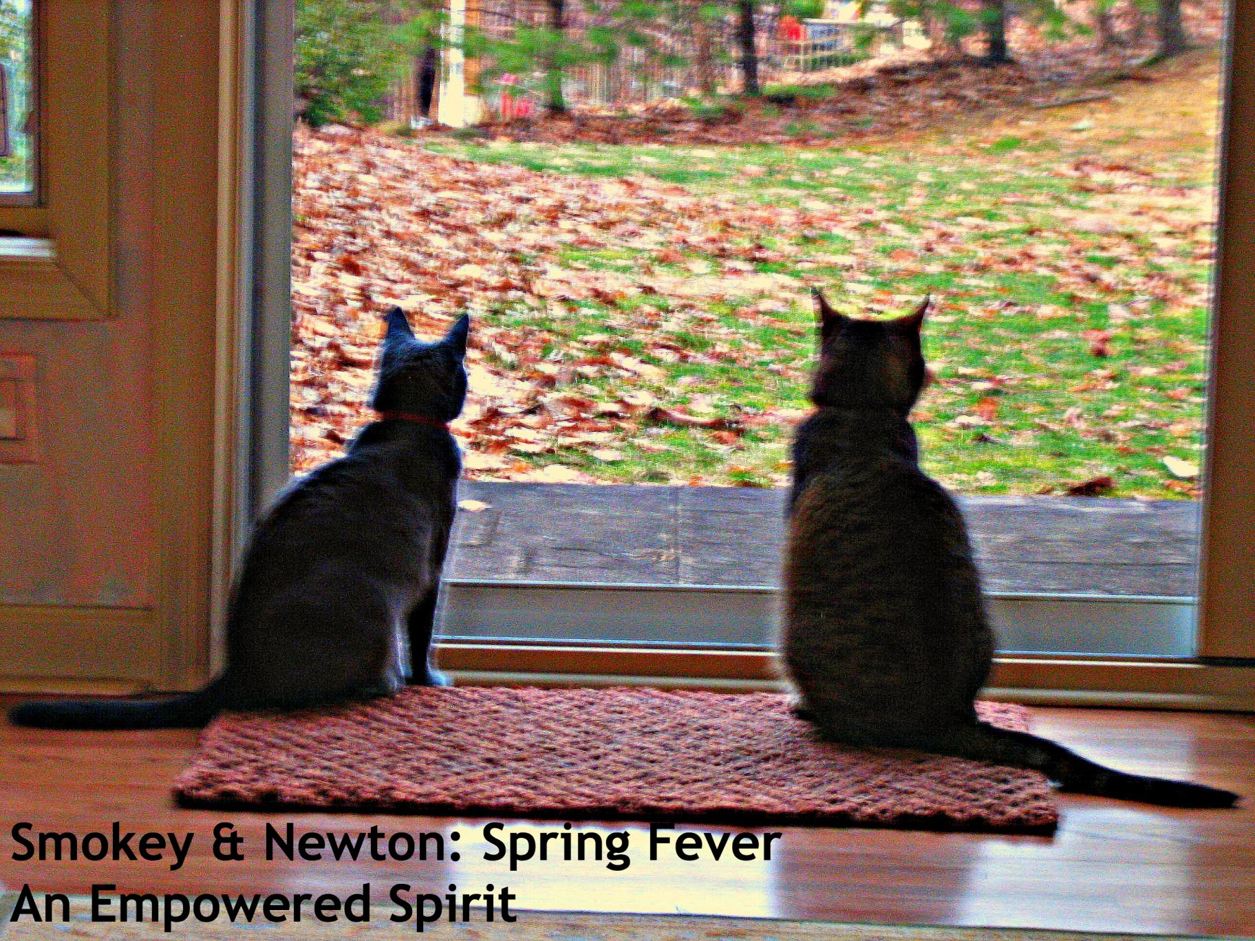 Cats and spring